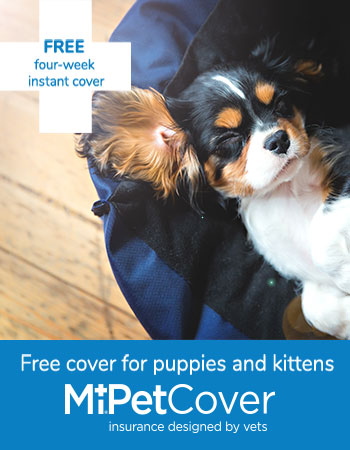 Mi Pet Cover four weeks free for puppies and kittens