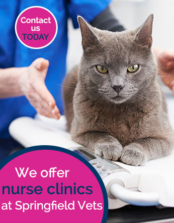 Nurse clinics at Springfield vets advert