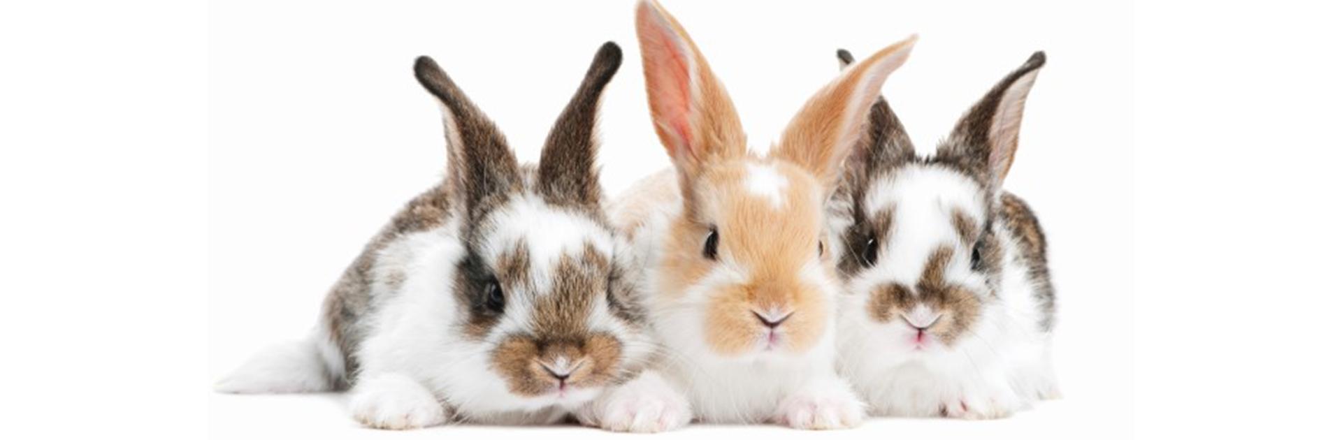 Rabbit awareness week banner